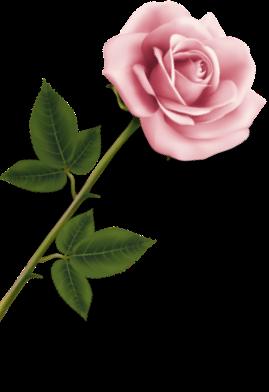 Ledbury Florist